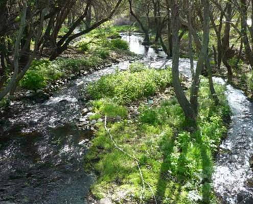 Río Berrocal_Moralzarzal
