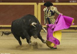 Torero frente a un toro en la plaza de Moralzarzal