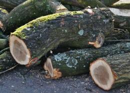 Troncos de madera cortados