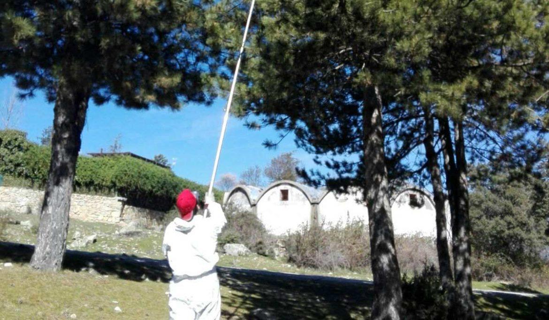 Un operario retra un nido de procesionaria en Moralzarzal