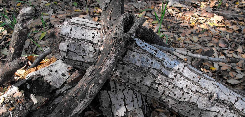 Madera seca en un bosque