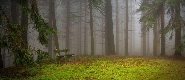 Bosque con niebla y un banco