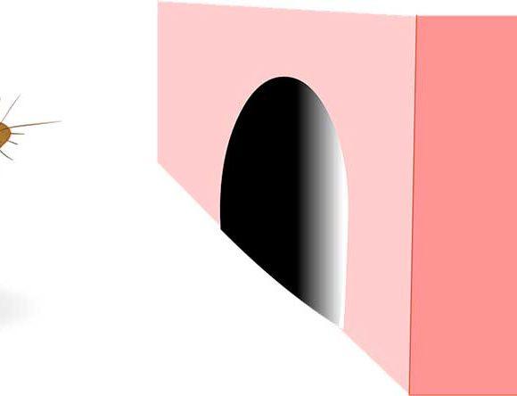 Ilustración de un ratón delante de una madriguera