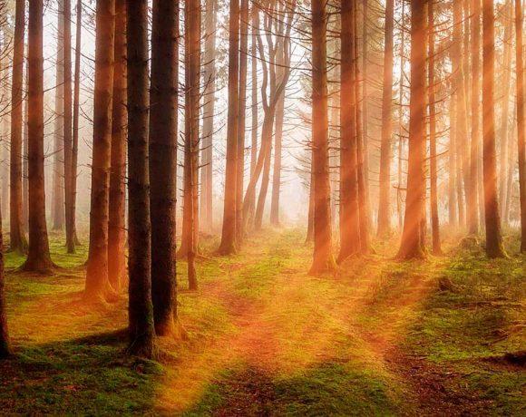 Troncos de árboles por los que entra el sol