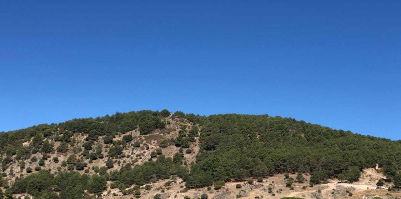 Ladera con árboles y cielo azul