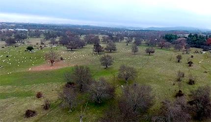 Imagen aérea de la Dehesa de Moralzarzal