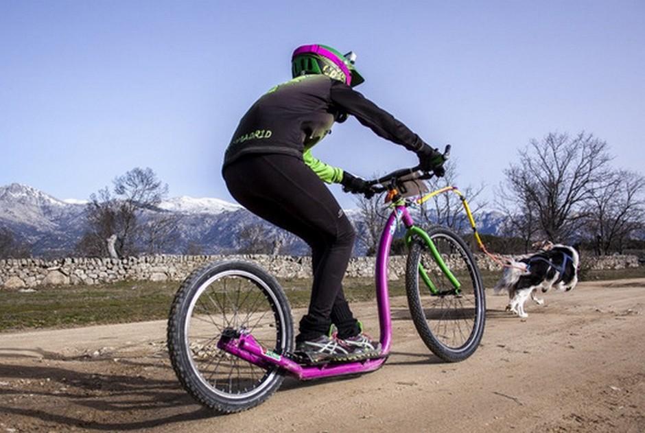 Un perro tira de una bicicleta en una prueb de mushing en Moralzarzal