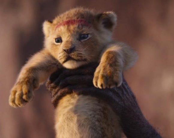 Un cachorro de león sostenido por unos brazos