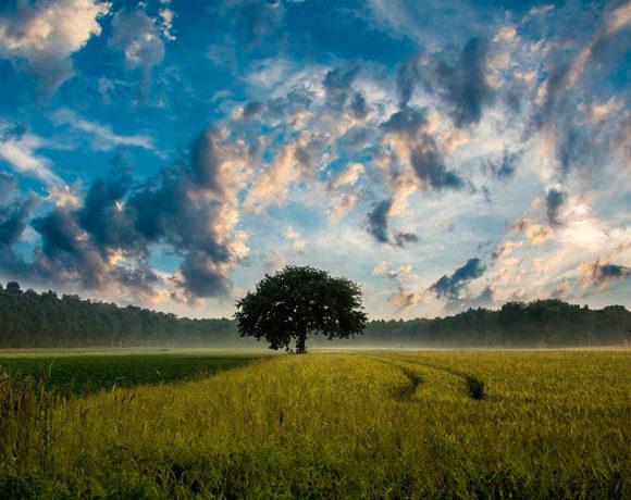 Atardecer en el campo con un árbol