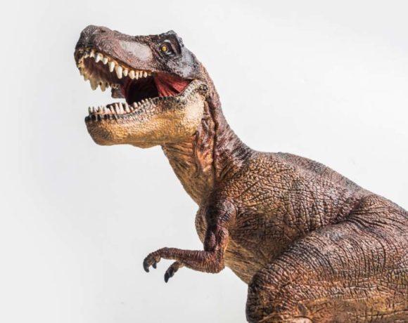 Tiranosaurio sobre fondo blanco