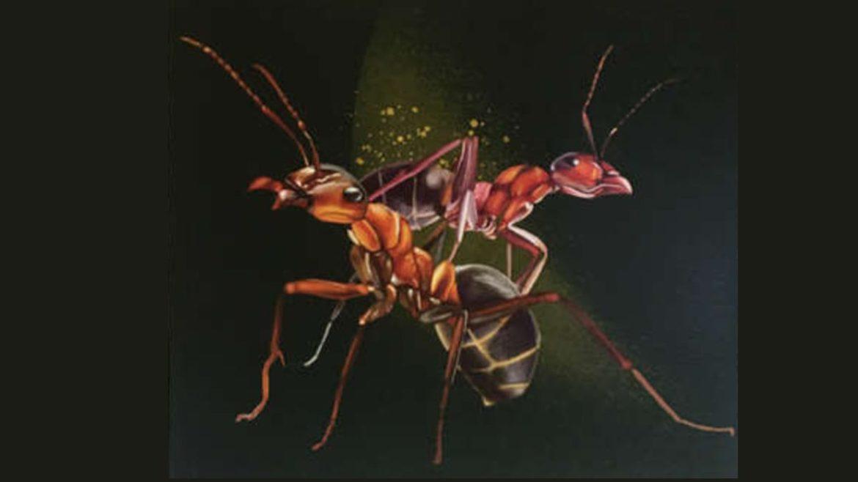 Dibujo de dos hormigas