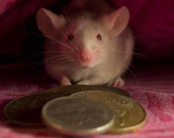 Un ratón con monedas delante