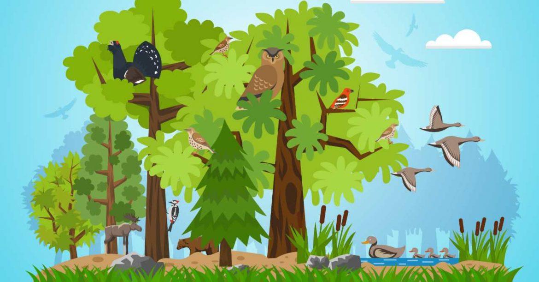 Ilustración de un bosque con pájaros