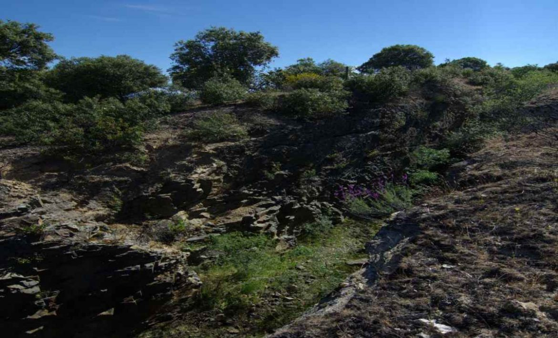 Paisaje de arbustos en Moralzarzal