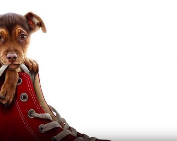 Un perro dentro de un zapato