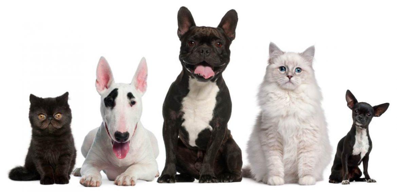 Perros y gatos mirando a cámara