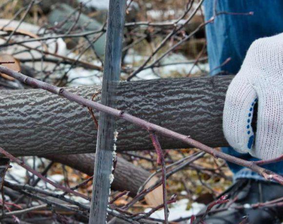 Una mano serrando un tronco