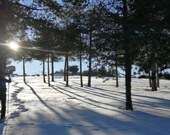 Paisaje nevado entre árboles