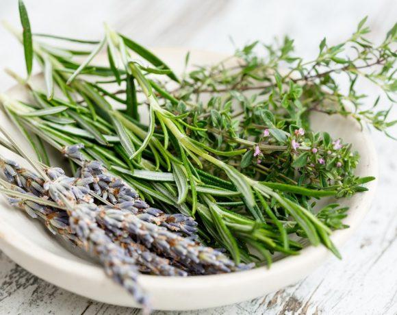Plantas medicinales sobre un plato