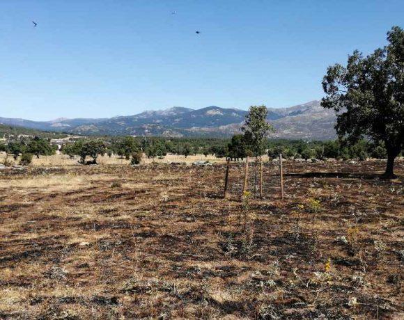 zona de pasto de la Dehesa Vieja de Moralzarzal quemada por un incendio