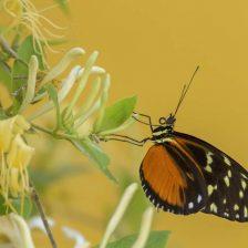 una mariposa sobre una flor